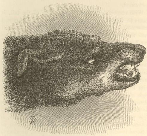 Snarling dog